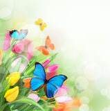 Beautiful tulips with exotic butterflies Royalty Free Stock Photography