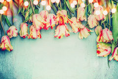 Beautiful tulips floral border with bokeh on blue vintage background, top view, place for text. Stock Photos