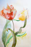 Beautiful tulips flowers. Watercolor illustration of Beautiful tulips flowers Royalty Free Stock Image