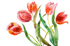 Beautiful tulips flowers. With clipping path Royalty Free Stock Photos