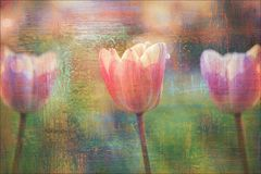Beautiful tulips flowers textured background stock images