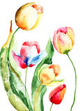 Beautiful tulips flowers. Watercolor illustration of Beautiful tulips flowers Stock Images