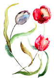 Beautiful Tulips flowers. Watercolor painting Royalty Free Stock Photography