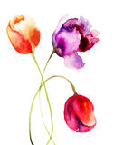 Beautiful Tulips flowers. Watercolor painting Royalty Free Stock Image