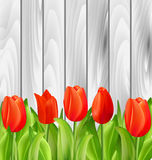 Beautiful Tulips Flowers on Wooden Background. Illustration Beautiful Tulips Flowers on Wooden Background - Vector royalty free illustration