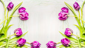 Beautiful tulips frame on white wooden background, spring flowers Stock Image
