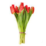 Beautiful tulips over white Stock Photography