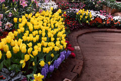 Beautiful Tulips in Parks Royalty Free Stock Image