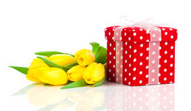 Beautiful tulips with red polka-dot gift box. Royalty Free Stock Image