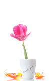 Beautiful tulips in a vase with gratitude Stock Photos