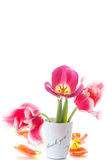 Beautiful tulips in a vase with gratitude. On a white background Stock Image