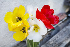 Beautiful tulips in a vase on a wooden background Stock Image