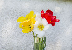 Beautiful tulips in a vase on a wooden background Stock Photography