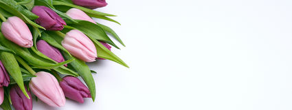 Beautiful tulips on a white background. Bouquet of beautiful flowers, buds of spring tulips, flowers on a white background, holiday items for congratulations Royalty Free Stock Images