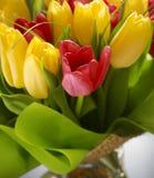 Beautiful tulips Royalty Free Stock Photos
