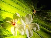 Beautiful tung flowers Stock Photos