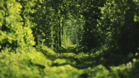 Beautiful tunnel of green trees . Tunnel of love. Old abandoned railway line, in the alley of green trees. Green tunnel of trees in the forest . Tunnel of love stock video footage