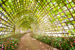 Beautiful tunnel from plant in flora park. Flower Stock Photos
