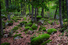 Beautiful turf covered stones with green moss in magic forest Royalty Free Stock Photography