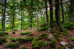 Beautiful turf covered stones with green moss in magic forest Stock Photo