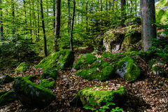 Beautiful turf covered stones with green moss in magic forest Stock Image