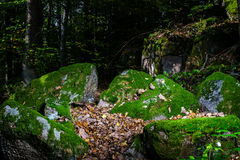 Beautiful turf covered stones with green moss in magic forest Royalty Free Stock Photos