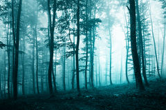 Beautiful turquoise blue forest Royalty Free Stock Image