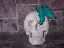 The beautiful turquoise decorative butterfly and skull Stock Photography