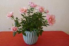 Beautiful turquoise flowerpot full of pink roses.  stock image