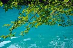 Beautiful turquoise lake in Plitvice, Croatia Royalty Free Stock Photo