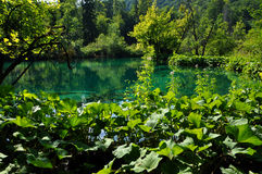 Beautiful turquoise lake in Plitvice, Croatia Royalty Free Stock Images