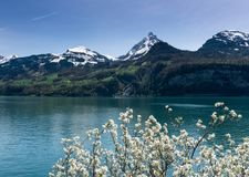 Beautiful turquoise mountain lake panorama with snow-covered peaks and green meadows and forests and blooming trees in the foregro. Beautiful turquoise mountain royalty free stock image