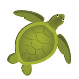 Beautiful turtle. A beautiful green turtle in a white background royalty free illustration