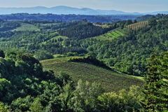 Beautiful Tuscan House. Beautiful Tuscan Vinery and House,Tuscany, Italy Royalty Free Stock Photography