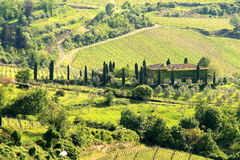 Beautiful Tuscan House. Beautiful Tuscan Vinery and House,Tuscany, Italy Stock Image