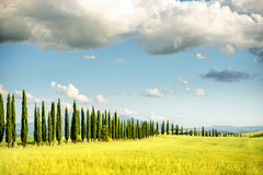 Beautiful tuscan landscape view stock image