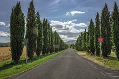 Beautiful Tuscan road with cypresses at the sides stock photos