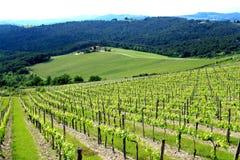Beautiful Tuscan Vinery Royalty Free Stock Image