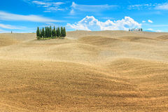 Beautiful Tuscany landscape with cypress trees near Siena,Italy,Europe Royalty Free Stock Photo