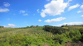 Beautiful Tuscany landscape in Italy . Beautiful landscapes of molar Tuscany in Italy Stock Image