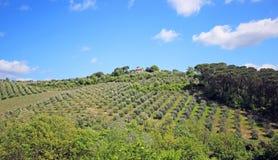 Beautiful Tuscany landscape in Italy . Beautiful landscapes of molar Tuscany in Italy Stock Images
