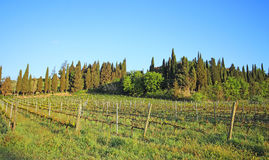 Beautiful Tuscany landscape in Italy . Beautiful landscapes of molar Tuscany in Italy Royalty Free Stock Images