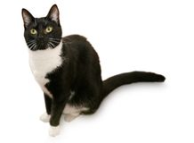 Beautiful tuxedo cat Stock Photos