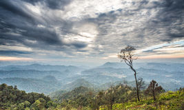 Beautiful twilight landscape in rain forest Royalty Free Stock Photography