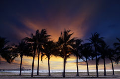 Beautiful  twilight sky and dusky with silhouete coconut tree on Royalty Free Stock Image
