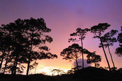 Beautiful twilight sunset in rain forest. Stock Images