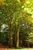 Beech green tree stock photo