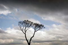 Beautiful twin trees in the cloudy blue sky Stock Image