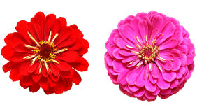 Beautiful two flowers Royalty Free Stock Photo