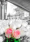 Beautiful two pink roses flowers at a parisian flower store. Beautiful pink and red roses flowers at a Parisian flower store with black and white background Stock Image